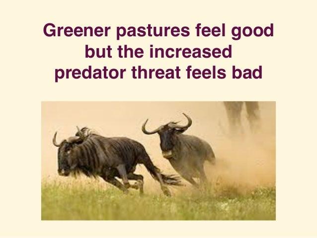 Greener pastures feel good but the increased predator threat feels bad