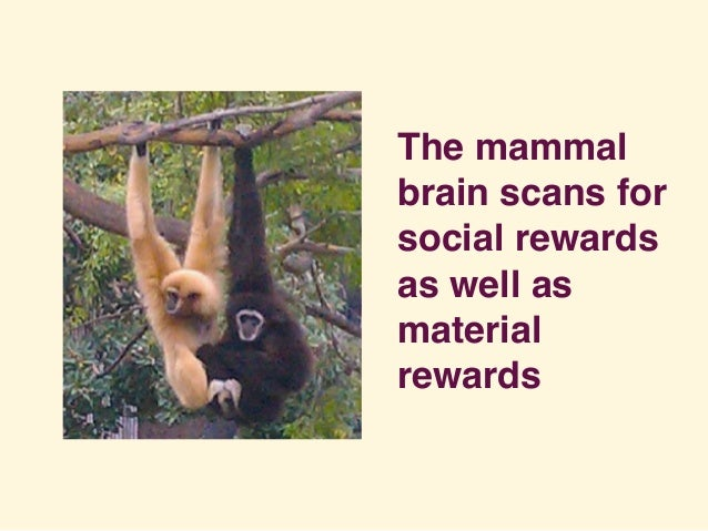 The mammal brain scans for social rewards as well as material rewards
