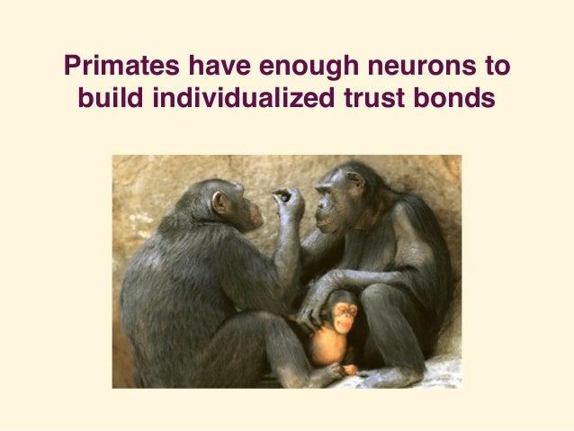 Primates have enough neurons to build individualized trust bonds