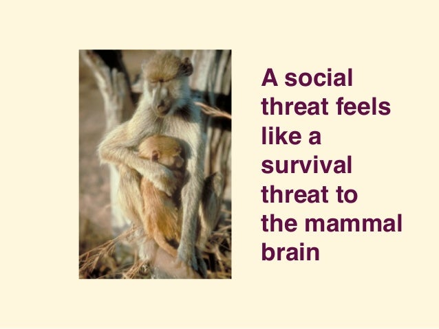 A social threat feels like a survival threat to the mammal brain