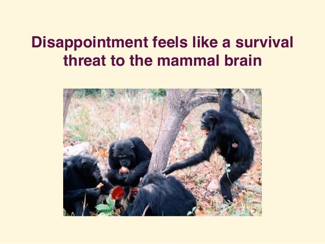 Disappointment feels like a survival threat to the mammal brain