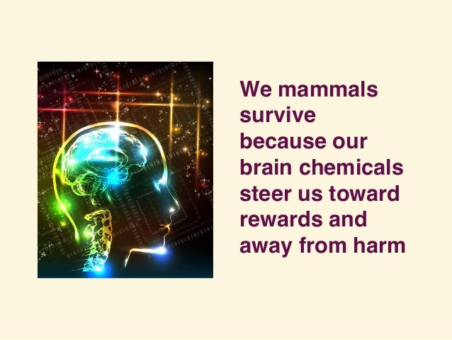 We mammals survive because our brain chemicals steer us toward rewards and away from harm