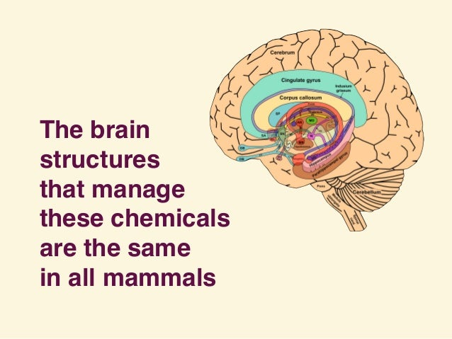 The brain