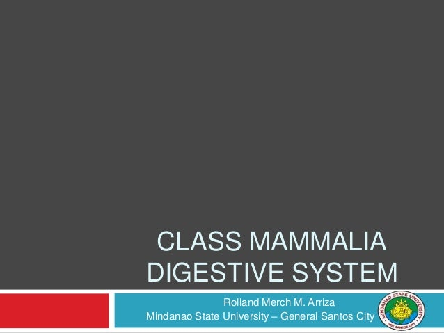 Rolland Merch M. Arriza Mindanao State University – General Santos City CLASS MAMMALIA DIGESTIVE SYSTEM