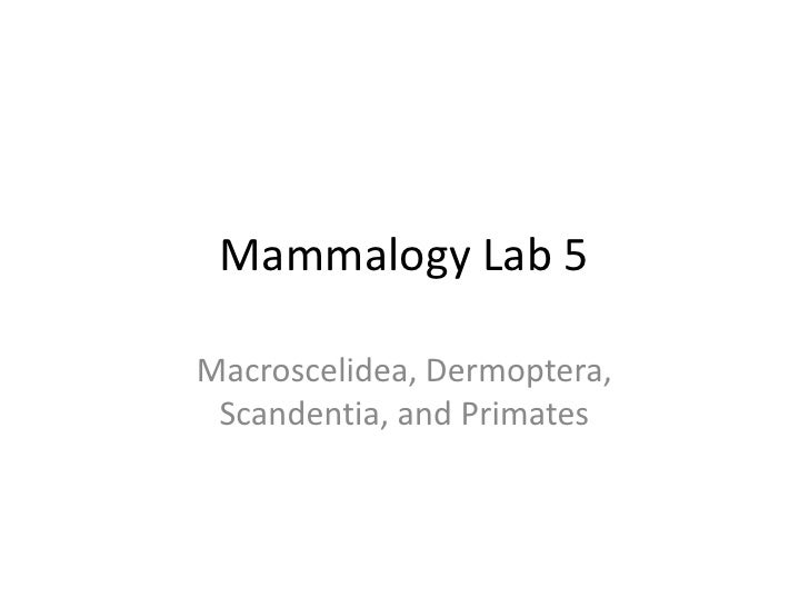 Mammalogy Lab 5<br />Macroscelidea, Dermoptera, Scandentia, and Primates<br />