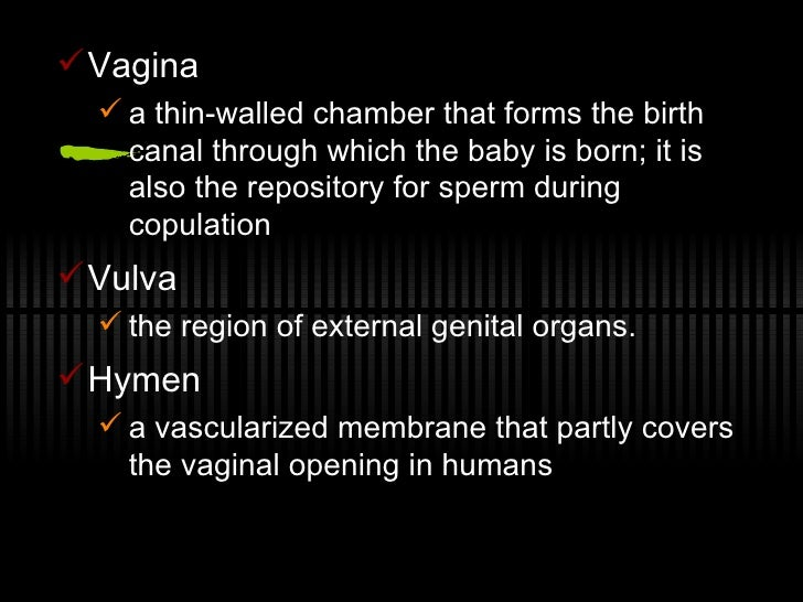 mammalian reproduction Mammalian reproduction comes in not just one but three basic types the one we all know about, because it's what happened to us, is the placental variety sperm and egg meet and set up home in the uterus, growing into a foetus that is nourished by the placenta and is then born at a fairly well-developed stage.