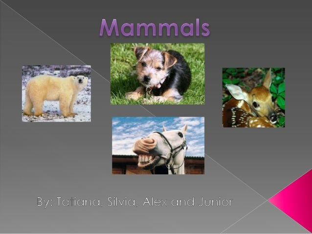 PARTS Most mammals get around on four legs.  Some aquatic mammals have fins.  And other mammals have got wings.