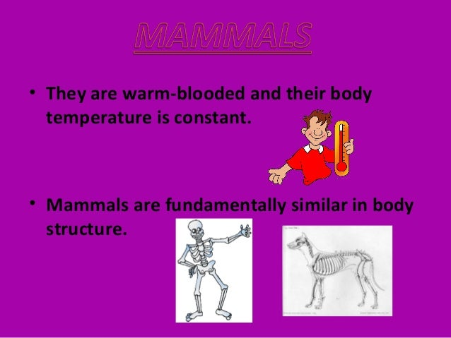 • They have lungs and they need air to breathe. • Mammal mothers feed their young babies with milk.