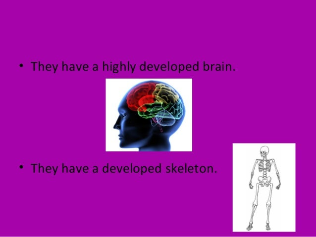 • They have an advanced nervous system. • They adaptable to land, sea and air.