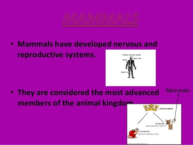 • Most Mammals live on land. • Most Mammals have four legs and ears that stick out. land Four legs Ears that stick out
