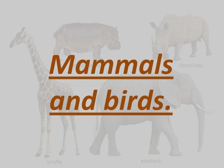 Mammals and birds.<br />