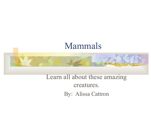 Mammals Learn all about these amazing creatures. By: Alissa Cattron