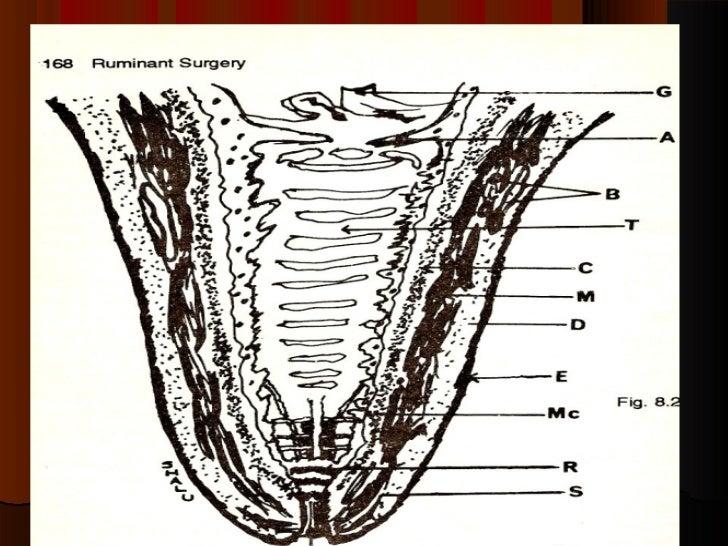 Mammary Glands Power Point By Dr Rekha Pathak Senior Scientist Ivri