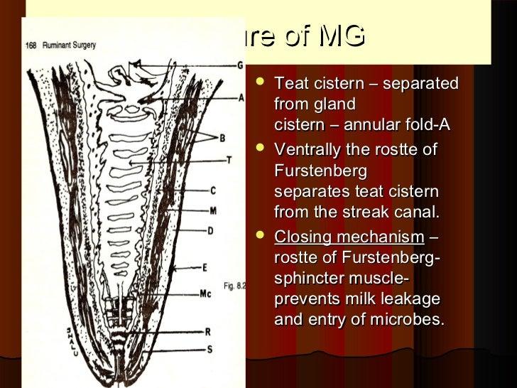 Mammary glands power point by Dr. Rekha Pathak senior scientist IVRI