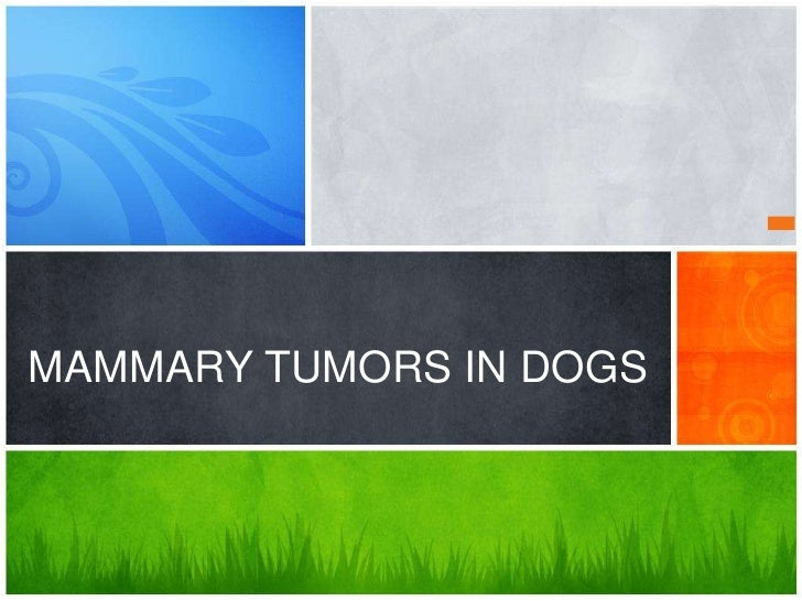 MAMMARY TUMORS IN DOGS<br />