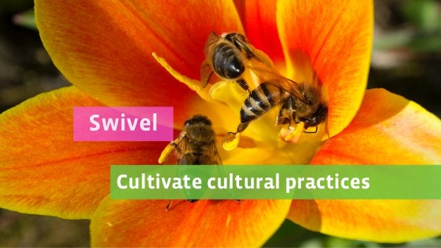 Cultivate cultural practices Swivel