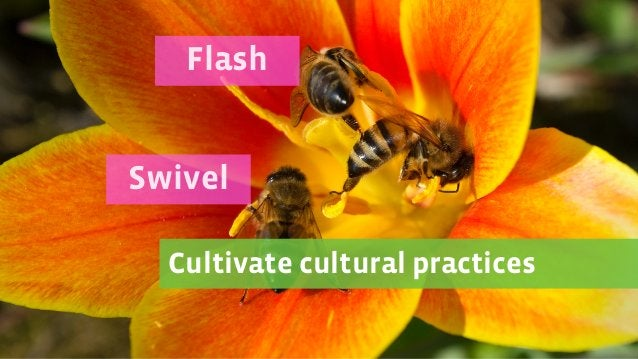 Cultivate cultural practices Swivel Flash