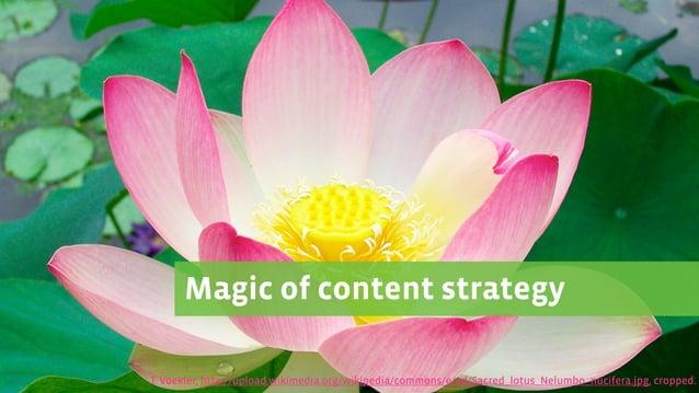 Magic of content strategy T. Voekler, http://upload.wikimedia.org/wikipedia/commons/e/ed/Sacred_lotus_Nelumbo_nucifera.jpg...