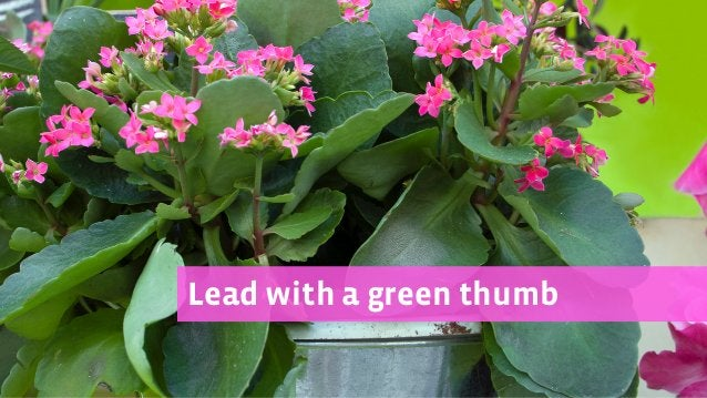 Lead with a green thumb