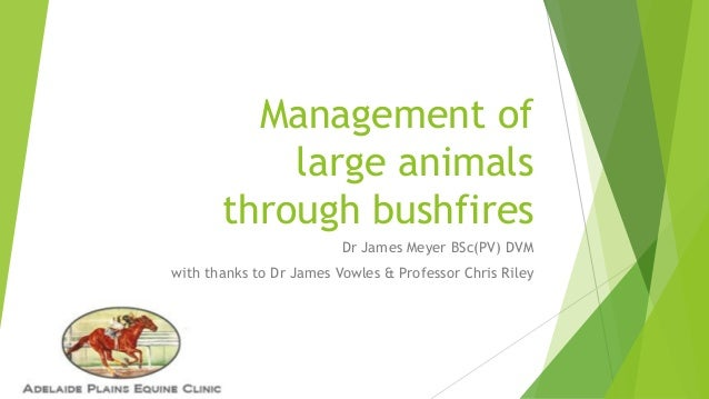 Management of large animals through bushfires Dr James Meyer BSc(PV) DVM with thanks to Dr James Vowles & Professor Chris ...