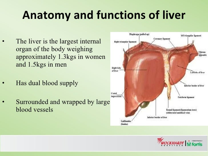 Management Of Large Liver Tumors