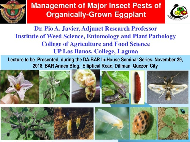 Management Of Major Insect Pests Of Organically Grown Egglant