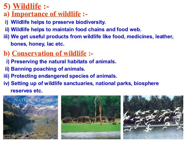 essay on importance of conservation essay on importance of conservation of natural resources
