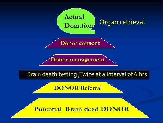 Surprising Realities of Brain Death and Organ Donation ...
