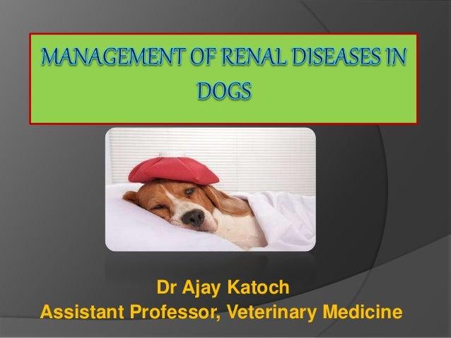Dr Ajay Katoch Assistant Professor, Veterinary Medicine