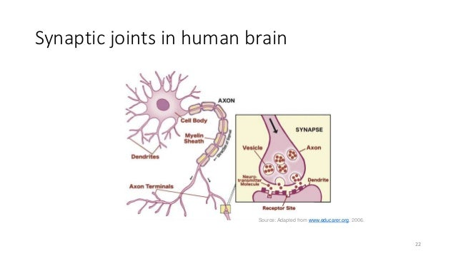 Synaptic joints in human brain Source: Adapted from www.educarer.org, 2006. 22