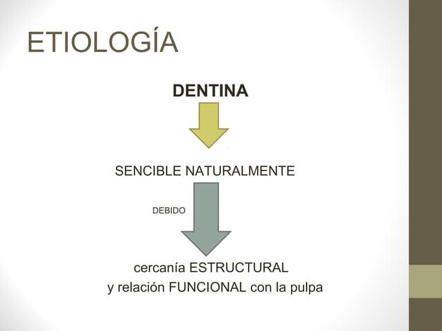 ETIOLOGÍA             DENTINA     SENCIBLE NATURALMENTE          DEBIDO         cercanía ESTRUCTURAL    y relación FUNCION...