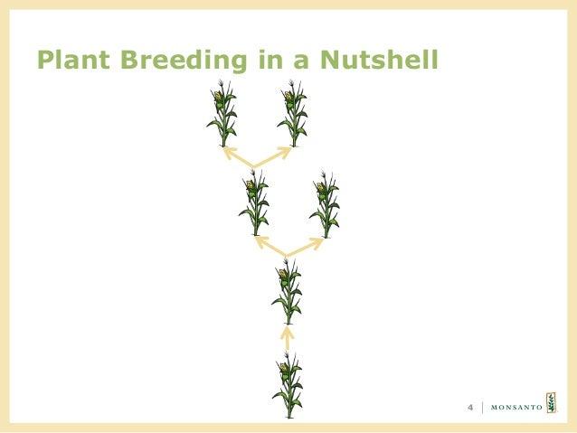 Plant Breeding in a Nutshell 4