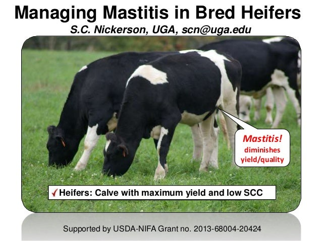 Managing Mastitis in Bred Heifers S.C. Nickerson, UGA, scn@uga.edu Goal: Improve milk quantity & qualityMastitis managemen...