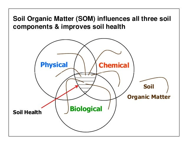 soil and organic matter Soils typically contain a combination of four different components mineral matter makes up the largest proportion of soil, water and air are present in roughly equal volume and organic matter is.