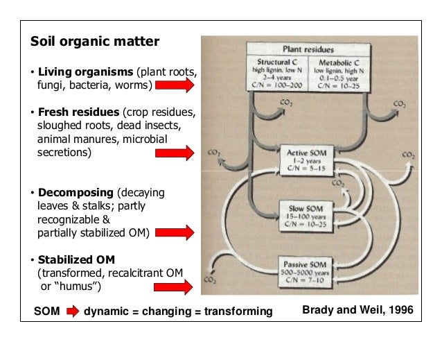 Managing organic matter for soil health and fertility for Soil organisms