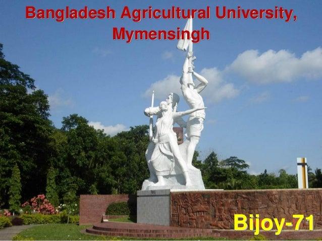 Bangladesh Agricultural University, Mymensingh Bijoy-71