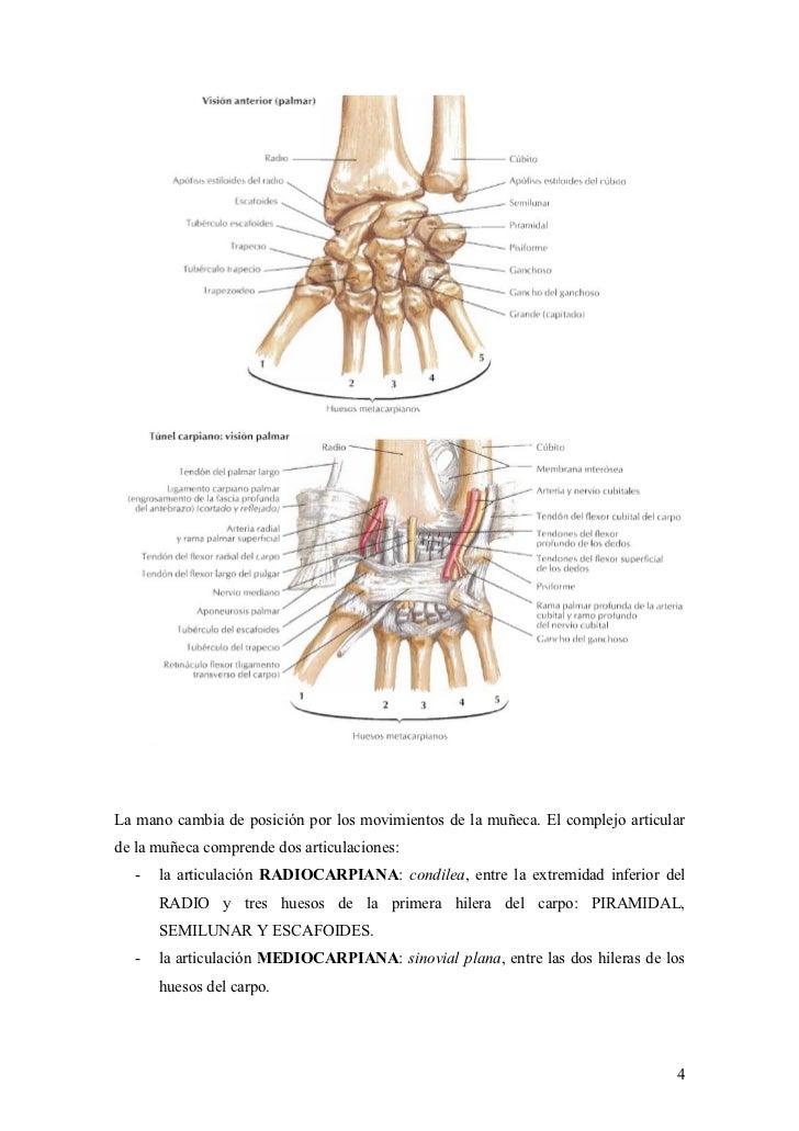 2012-04-10)Muñeca y mano-patologia y exploracion.doc