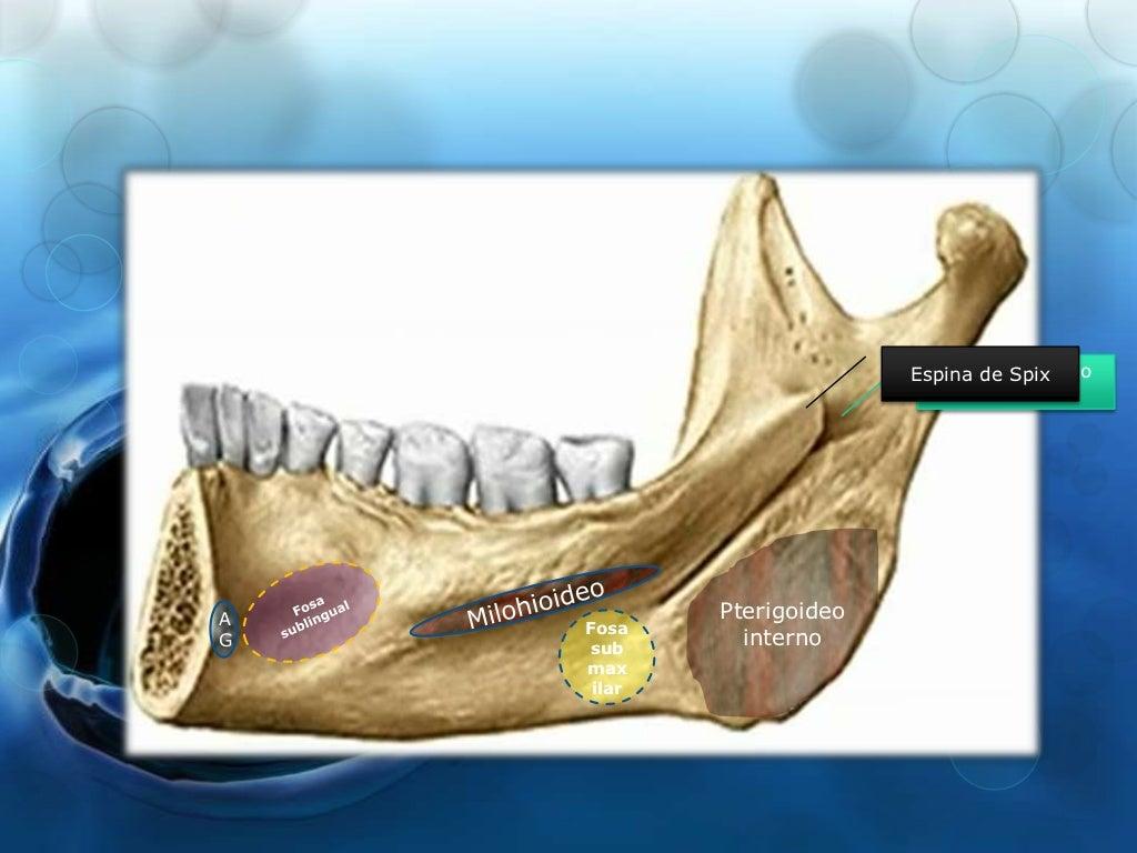 Anatomia del Maxilar Inferior