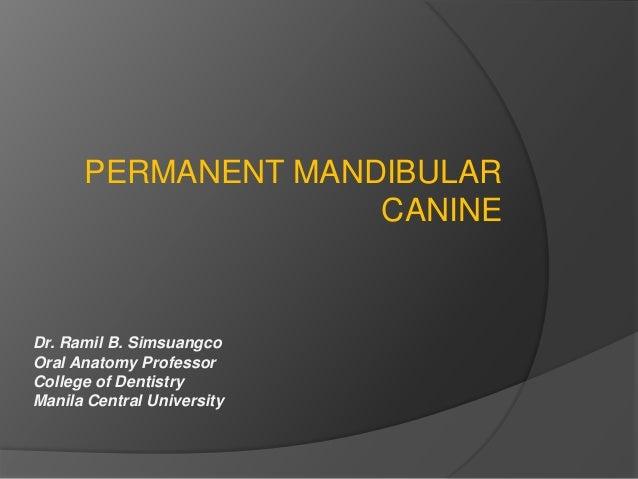 PERMANENT MANDIBULAR  CANINE  Dr. Ramil B. Simsuangco  Oral Anatomy Professor  College of Dentistry  Manila Central Univer...
