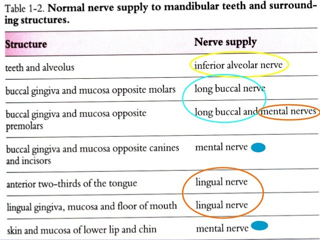 Mandibular Local Anesthesia