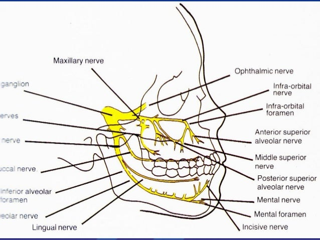 Mandibular Local Anesthesia