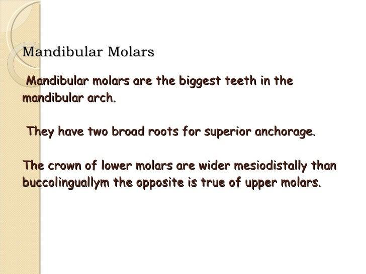 Mandibular Molars Slide 2