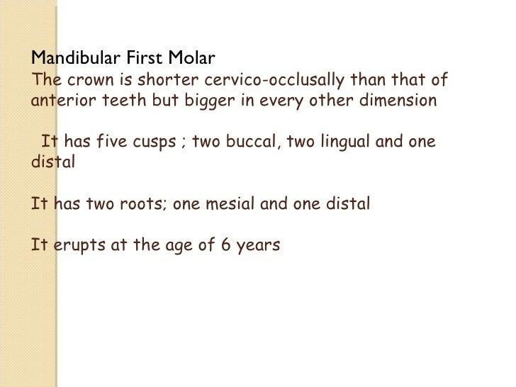 Mandibular Molars Slide 3