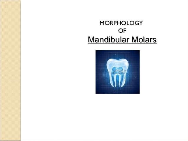 MORPHOLOGYMORPHOLOGY OFOF Mandibular MolarsMandibular Molars