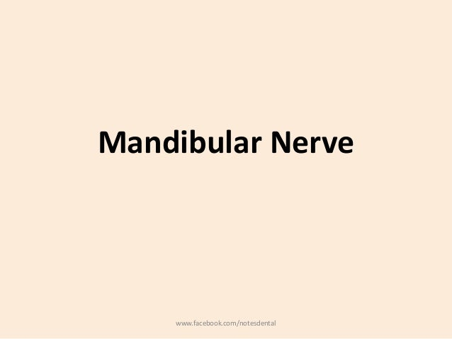 Mandibular Nerve www.facebook.com/notesdental