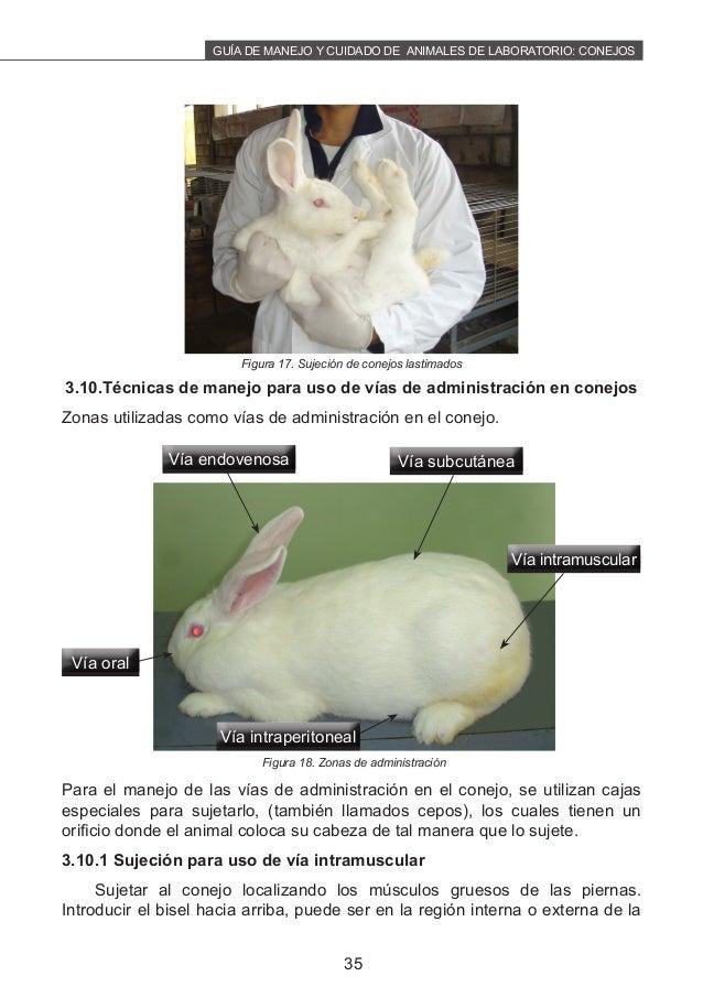 Manejo cuidado-conejos