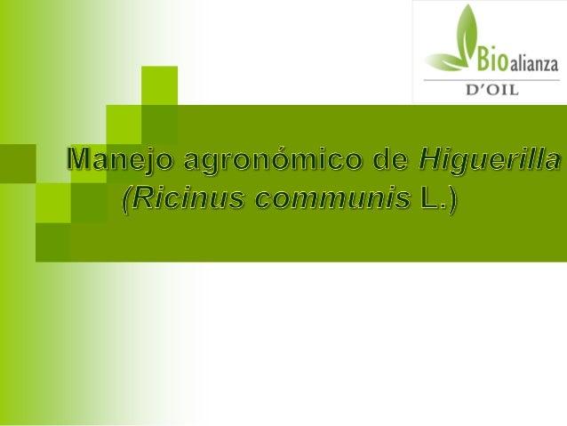  Altura: 0- 2.200 m.s.n.m. Suelos: Se desarrolla en suelos Francos y  Franco-arenosos. Precipitación: 600- 2.500 mm  To...