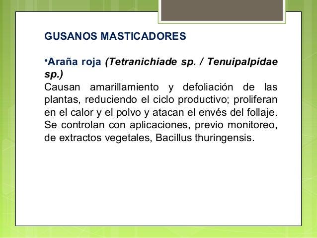 Los parásitos en el río en la amazona