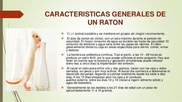 Manejo de animales de laboratorio - Cepos para ratones ...
