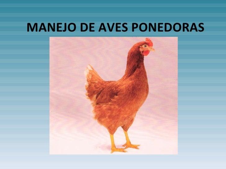 MANEJO DE AVES PONEDORAS